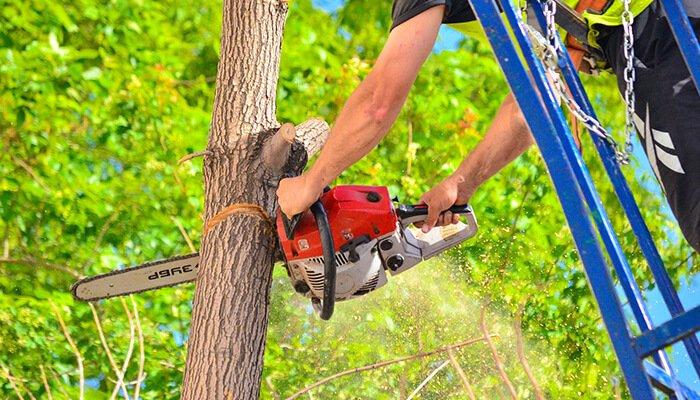 irvine tree service chainsaw